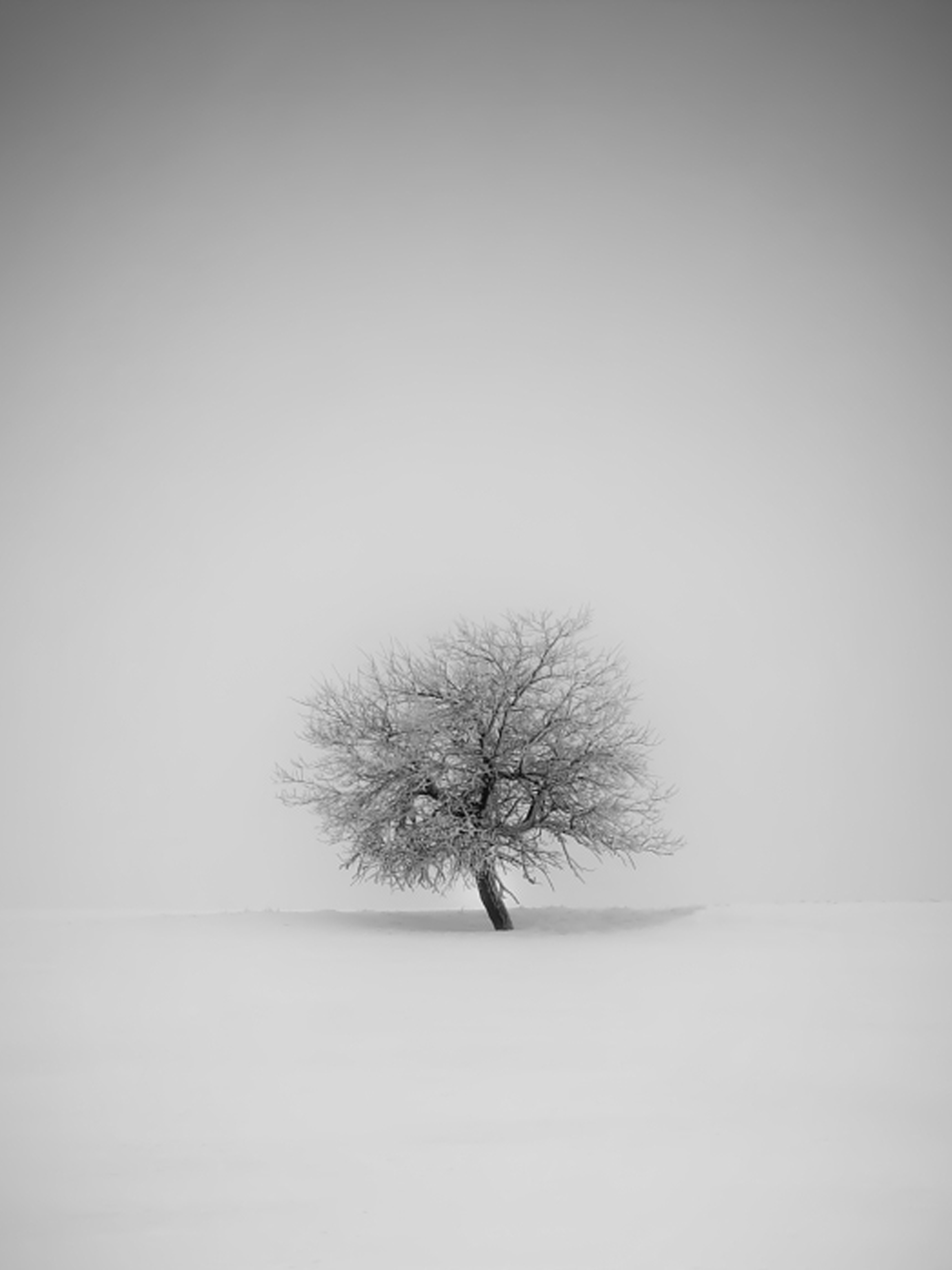 Winter tree mobile wallpaper miniwallist download for ios voltagebd Images