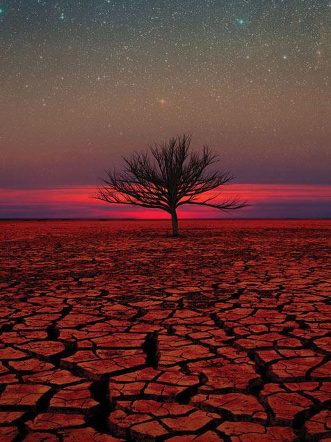 Desert Sunset Tree Mobile Wallpaper Miniwallist