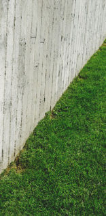 Backyard Grass Mobile Wallpaper